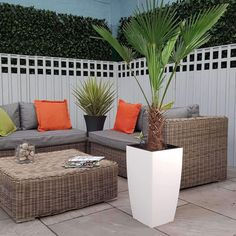 Trachycarpus Fortunie Palm Tree 4.5-5.5ft Inc Decorative Planter Choice