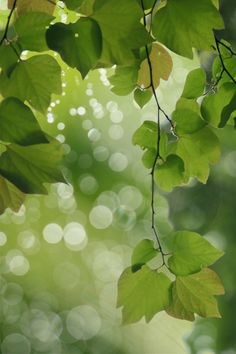 faerieforests:  Green leaves. bycate♪
