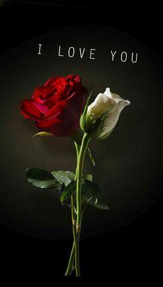 I love you roses Love Rose Flower, Beautiful Rose Flowers, Beautiful Love, Love Flowers, Cute Love, My Love, I Love You Images, Love You Gif, Good Morning Love