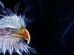 All types of eagle birds in the world with amazing facts. Bald eagles are symbol of American. They are at the top of the food chain, with some species feeding on big prey like monkeys and sloths. Cool Eagle Wallpapers, Panda Wallpapers, Eagle Images, Eagle Pictures, Wings Wallpaper, Bird Wallpaper, Eagle Background, Eagle Face, Eagle Drawing
