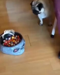 собаки милые смешные видео cat and dog video kittens cutest with captions silly hilarious memes humor Hilarious Kitty So Cute Cat Video Смешные истории собака видео dog funny dog funny funny aesthetic funny hilarious funny sleeping Funny Animal Memes, Dog Memes, Cute Funny Animals, Funny Animal Pictures, Cute Baby Animals, Funny Cute, Funny Dogs, Animals And Pets, Cute Dogs