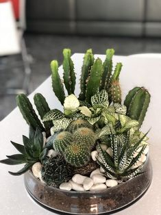 filled with cacti and succulents. Terrarium filled with cacti and succulents.Terrarium filled with cacti and succulents. Terrarium filled with cacti and succulents. Mini Cactus Garden, Succulent Gardening, Cactus Flower, Cacti And Succulents, Planting Succulents, Cactus Plants, Flower Pots, Flower Bookey, Flower Film
