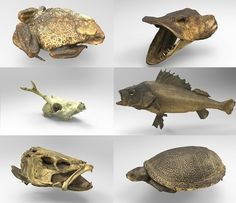 Skanery 3D muzeum cyfrowe threeding Turtle, Lion Sculpture, Statue, Animals, Art, Art Background, Turtles, Animales, Animaux
