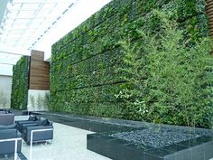 The Green Wall or Living Wall is the first of its kind in Western Canada----- it is made up with over 20,000 plants and 20 varieties including ferns, ivies, creeping fig, spider and club moss, to name a few. The Wall is made up of two sections. The larger section encompasses an area of 1,299 sq ft and the smaller section is 759sq ft.