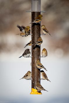 """""""I keep telling you, this isn't 'a few birds'!"""" --Alfred Hitchcock's """"The Birds."""" East Stroudsburg, PA (1/14/2014)"""