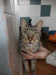 LIONEL - Gato adoptado - AsoKa el Grande