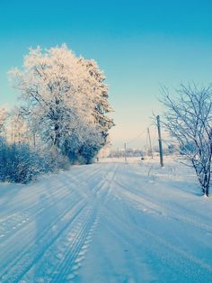 Winter Outdoor outdoors winter snow photography