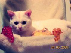 #cat #cute #morfeo