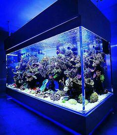 Alex's aquarium for Goldie and Sparkle. Just imagine that it's waaaay bigger. Wall Aquarium, Saltwater Aquarium Fish, Home Aquarium, Aquarium Design, Saltwater Tank, Marine Aquarium, Reef Aquarium, Aquarium Cabinet, Fish Tank Themes