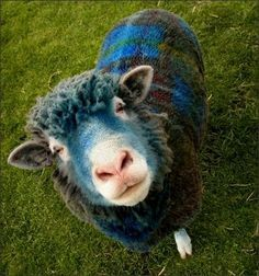 Sheep in all colours on Pinterest | Sheep, Tartan and Farmers