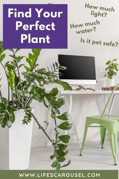 Not sure which type of houseplant to get? Take this houseplant quiz to find your PERFECT match! Answer these easy questions to find the right plant for you! Growing Vegetables Indoors, Types Of Houseplants, Pots, Easy Plants To Grow, Low Light Plants, Pot Plante, Indoor Plants, Indoor Gardening, Potted Plants