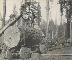 1907 Nice Log!! Look at the solid wheels.