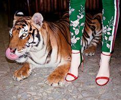 Nova campanha da Gucci (Foto: Divulgação / Glen Luchford)