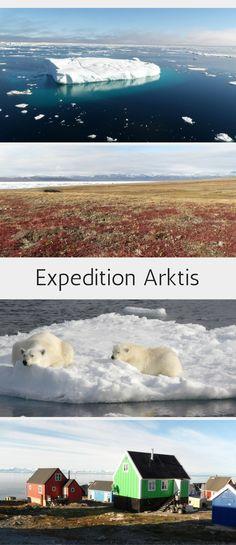 Gänsehaut-Moment: auf dem Packeis vorm Nordost-Grönland Nationalpark haben wir Eisbären in freier Wildbahn beobachtet! Reisebericht und Bilder zu unserer Expeditions-Seereise zu den drei arktischen Inseln Spitzbergen, Grönland und Island im Blogpost. #eisbären #expedition  #seereise #grönland #spitzbergen #island #arktis #travelinspired