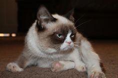 adorable kitty ^^