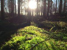 Metsässä voi huokaista syvään ja hellittää. Antaa tuulen suhinan ja lehtien havinan täyttää korvat ja mieli. Nauttia siitä hetkestä, kun ei ole kiire mihinkään eikä tarvitse olla missään muualla. Antaa metsän tehdä taikojaan ja palata kotiin, jotta voi kaivata takaisin metsään 💚
