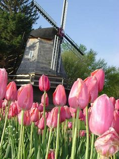Each May, Pella, Iowa, celebrates Tulip Time and the community's proud Dutch heritage.