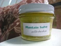 plantain salve tutorial