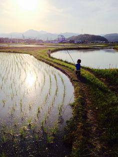 田植えの終わった水田で虫取りの子供。