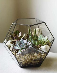 Awesome Ideas DIY Indoor Succulents Plant Garden – Design & Best Awesome Ideas DIY Indoor Succulents Plant Garden – Design & Decorating It's time to learn how to make your own terrarium with expert glass artist Lindsey Kearns. How To Make a Terrarium Types Of Succulents, Cacti And Succulents, Planting Succulents, Planting Flowers, Succulent Arrangements, Suculentas Interior, Decoration Plante, Air Plants, Plants Indoor