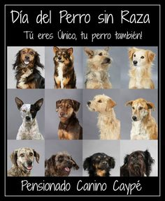Por el día del perro sin raza (28 de mayo) #díadelperrosinraza Ver más en: