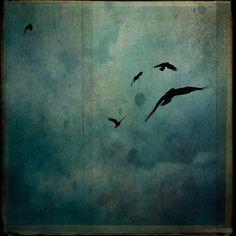 terrenonussbukorrek:  Crows