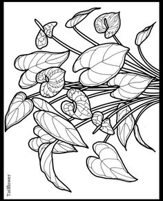 little tropical flowers sample pages dover publications - Tropical Flowers Coloring Pages