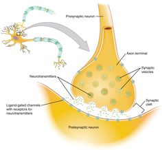 Diagram Of A Neuron Ihotos Reflex Arc Spinal Reflex Arc Anatomical Scheme Vector. Diagram Of A Neuron Neurons Where Does Their Electricity Come From. Neuron Structure And Function, Nervous System Diagram, Neuromuscular Junction, Science Diagrams, Dopamine Receptor, Motor Neuron, Scanning Electron Micrograph