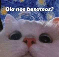 Cartoon Memes, Funny Memes, Reaction Pictures, Funny Pictures, Memes Lindos, Wholesome Pictures, Cute Love Memes, Frases Tumblr, Spanish Memes