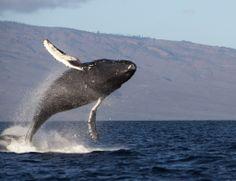 fb-2011-hawaii-7  scott moore CC flkr