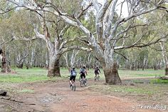 River Red Gum National Park, NSW - a #hooroo #SecretSpots in Australia and a great place for bush camping, nature trails, kayaking, and biking.