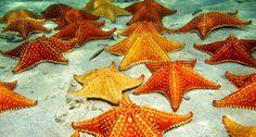 Shop Starfish on a Sandy Ocean Floor Wallpaper in Wildlife Theme What Do Starfish Eat, City Resort, Underwater Plants, Ocean Underwater, Ocean Deep, Deep Sea, Floor Wallpaper, Cozumel, Animals Images