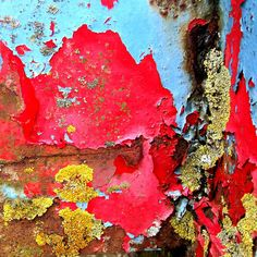 Lichen and peeling paint