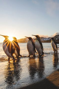 Penguins sunrise