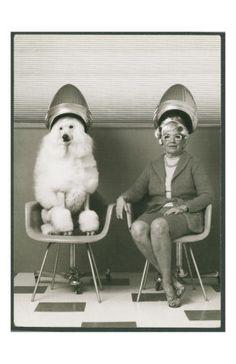 vintage beauty shop hair salon woman and poodle under hair dryers Grooming Salon, Pet Grooming, Dog Salon, Salon Art, Sit Under Hair Dryer, Fun Fotos, Hj History, American Bully, Vintage Hair Salons