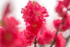 Hana peach by marbee .info, via 500px