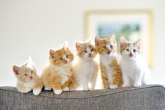 Kittens by Olav  Thokle