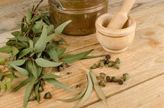 Wondering what the eucalyptus fuss is all about? Babo Botanicals reveals 8 amazing eucalyptus benefits and how you can use this plant in your daily life! Home Remedies For Asthma, Natural Asthma Remedies, Ayurvedic Remedies, Essential Oils For Asthma, Eucalyptus Oil, Natural Treatments, The Cure, Immune System, Medicinal Plants