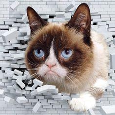 Grumpy Cat @RealGrumpyCat