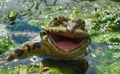 Hilarious Winners of the First Annual 'Comedy Wildlife Photography Awards' More info: Comedy Wildlife Photo Awards | Facebook  These days there are countless annual photography competit…