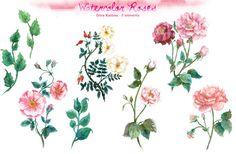 Watercolor Rose Clip Art by Dora Katona on Creative Market