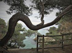 Cami de ronda Platja d'Aro a Sant Antoni de Calonge -Rutas Mar y Mon #camideronda #gr92