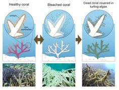 Energy & Environment: Delingpole's Great Coral Reef Delusion