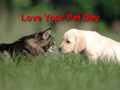This week we celebrate National Puppy Day. In honor of that, I'd like to take some time today to discuss how to safely introduce a new puppy to your cat. Animals And Pets, Baby Animals, Cute Animals, Funny Animals, Love Your Pet Day, National Puppy Day, National Days, Losing A Pet, New Puppy