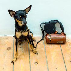 MERIKH Leashbag / Multifunctionalbag in leather.  #MERIKHbags #petbags #leatherbag  #dwarfpinscher
