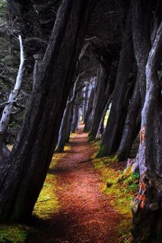 A trail cuts through a stand of trees in Sea Ranch, CA, US, photo by Russell Johnson/Flickr via http://showmeprettypictures.tumblr.com/post/107575796287/