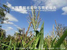 米国農務省穀物等需給報告を公表   http://subaru25.official.jp/overseas-food-supply-and-demand-information-318-2/