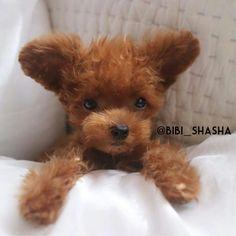 @bibi_shasha
