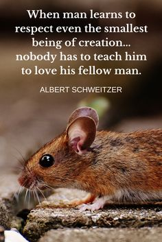 Humane Education teaches many character values, including respect for other living things. Learn more: www.hecoalition.org/what-is-humane-education