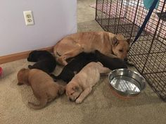 Litter of pups rescued from vacant house - rescuer later finds mother